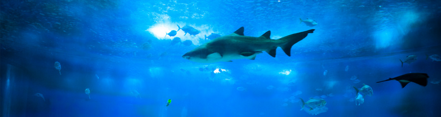 aquarium hai klein