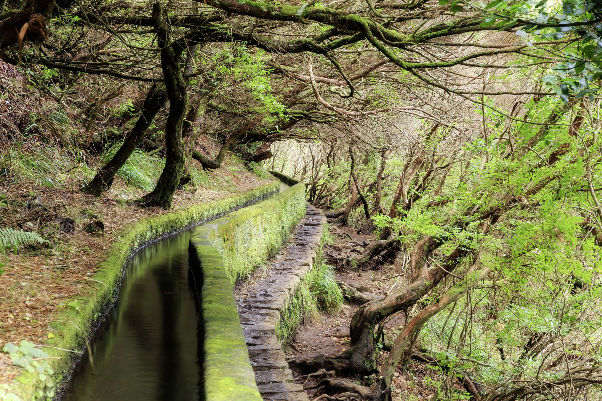 Madeira Levada Wanderweg