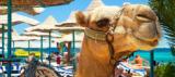 2 Wochen 5-Sterne Luxus-Urlaub in Hurghada ab 803 € – kostenlos stornierbar