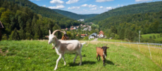 Schwarzwald: ÜN/F im 4* Hotel (91% HolidayCheck) nur 38,50 €