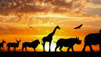 Zoo Special: Diverse Städte inkl. Hotel und Zoo-Eintritt ab 49 €